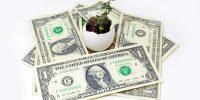 money-around-plant_GJpx9ktu 1000x685